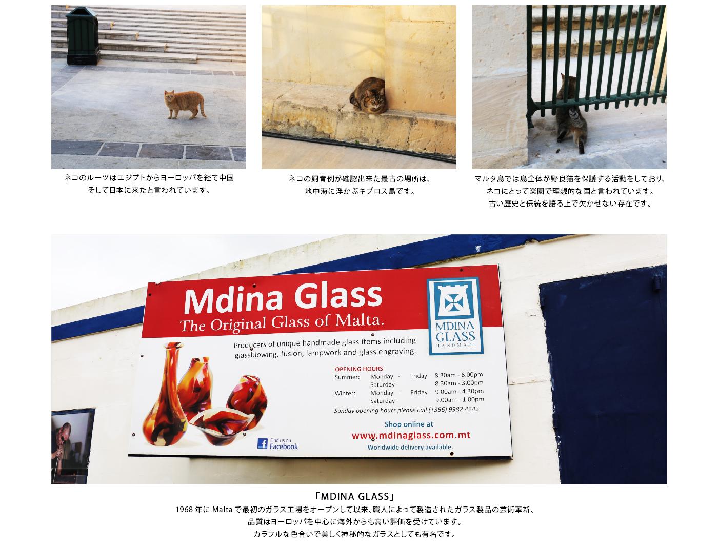 ネコのルーツはエジプトからヨーロッパを経て中国そして日本に来たと言われています。